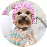 Banho e tosa Pet Shop Pelos e Cabelos