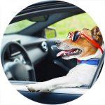taxi-pet_pet-shop_pelos-e-cabelos